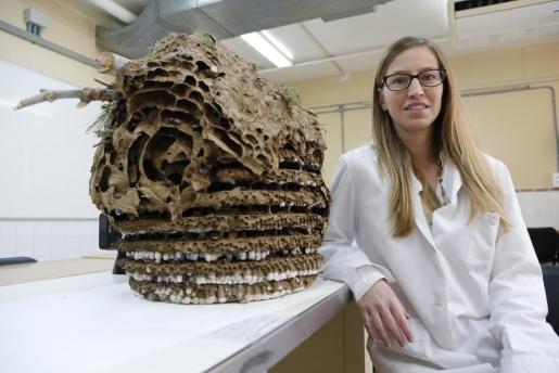 La profesora Mar Leza junto al avispero en el laboratorio de la UIB.