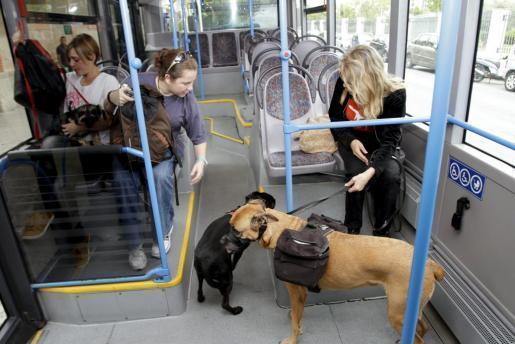 Varios perros viajan con sus dueños en el autobús.