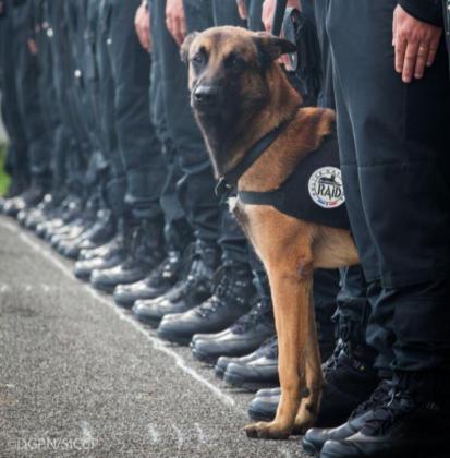 Diesel, la perra que ha fallecido en la operación antiterrorista en Saint Denis.