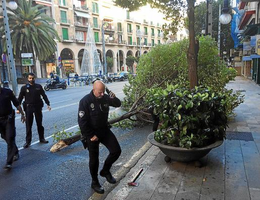 Los agentes junto a la rama de un árbol que cayó en Jaume III.