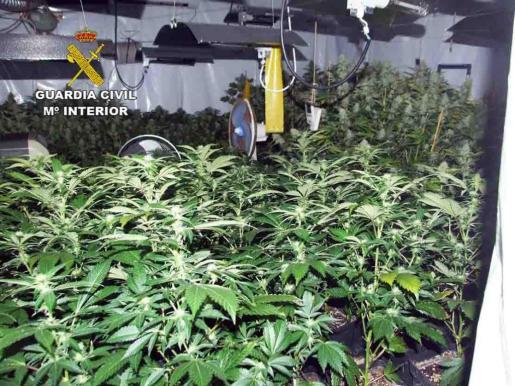 Un hombre, de 63 años, ha sido detenido a raíz de que la Guardia Civil encontrara en su casa de Villafranca de Bonany un invernadero con cerca de 400 plantas de marihuana, ha indicado este viernes el instituto armado.