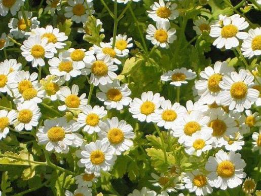 La herboristería aprovecha las propiedades de las plantas.