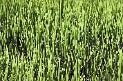 La compañía comercializa y distribuye fertilizantes para la jardinería y la agricultura.