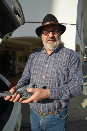 Joan Ferrà, vecino de Esporles, muestra el pichón recuperado.