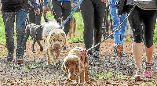 Los perros, protagonistas este fin de semana en Sant Antoni.