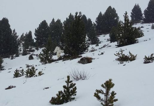 Imagen del extraño y enorme animal supuestamente avistado por unos esquiadores.