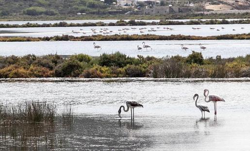 Se prevé a mejora de los parques naturales protegidos, como el de Ses Salines d' Eivissa i Formentera (en la imagen).