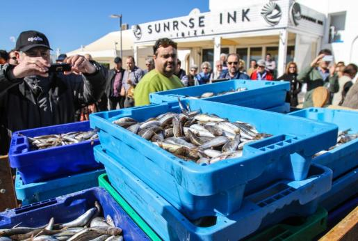 Ayer se sirvieron 14.000 raciones del popular pescado en Santa Eulària.