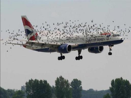 Un avión de la compañia British Airways rodeado por una bandada de pájaros.