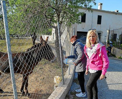 Vecinas de Andratx, dando agua y comida al burro 'Bernat'.
