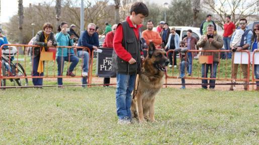Un niño junto a su perro durante el certament celebrado en Manacor.