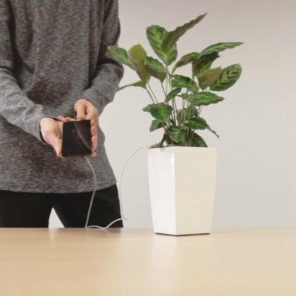 Cargador del móvil que utiliza la fotosíntesis de las plantas para producir la energía suficiente para recargar la batería.
