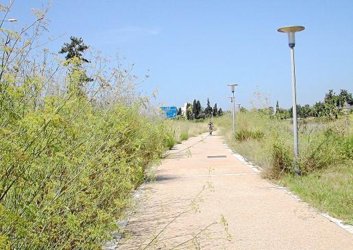 Los arbustos de hinojo invaden la calzada por la que circulan constantemente peatones y ciclistas.
