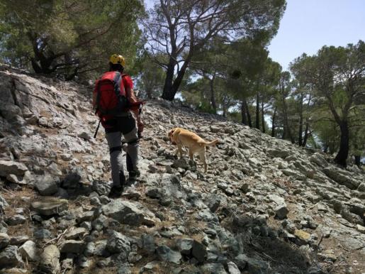 La unidad canina de los Bombers de Mallorca rastreando la zona.