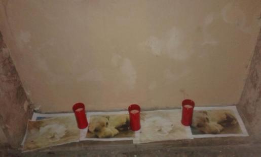 Fotografías del perro fallecido con velas en señal de homenaje.