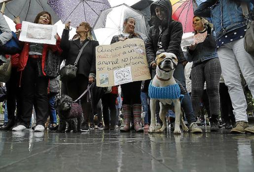 Un centenar de personas se manifestaron el sábado en defensa de los animales.