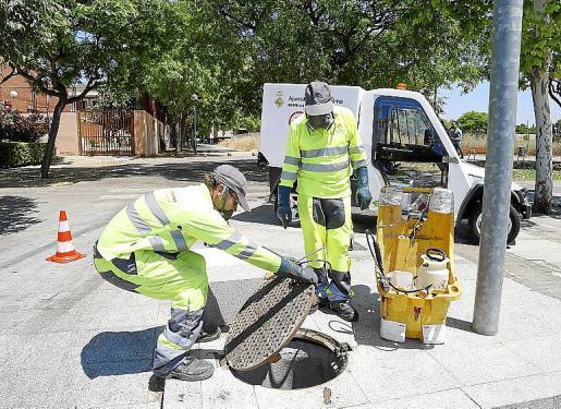 Operarios del control de plagas intensifican su trabajo cuando llega el calor.