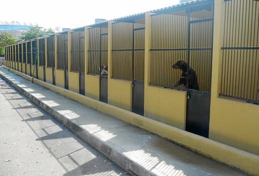 La acusada rompió uno de los candados que cierran las jaulas de Son Reus.