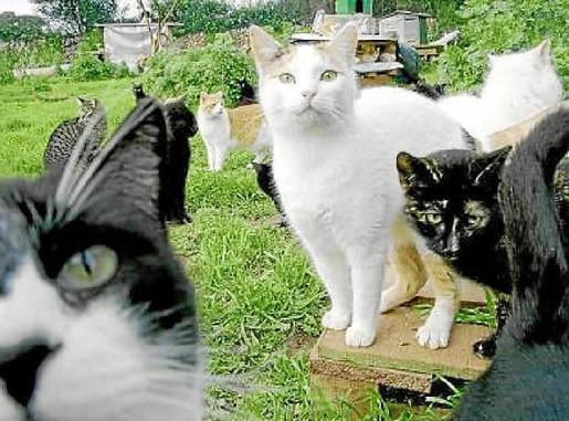 Los gatos salvajes representan un problema para los vecinos.