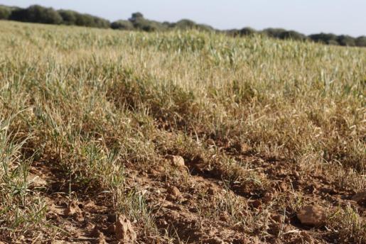 El sector agrario también ha mostrado su preocupación por la situación del campo ante la sequía.