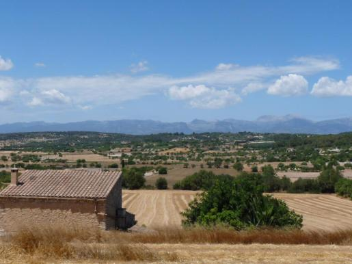 El Govern indicó este jueves que la zona del Pla de Mallorca ha entrado en situación de alerta por sequía.