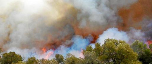 El temporal complicó la extinción del incendio en la finca de ses Comunes, en el municipio de Petra. Las llamas destruyeron alrededor de 45 hectáreas de garriga.