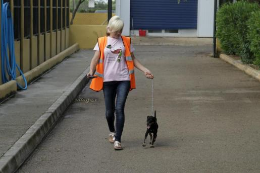 Una voluntaria pasea a un perro en el Centro Sanitario Municipal de Protección Animal de Son Reus.