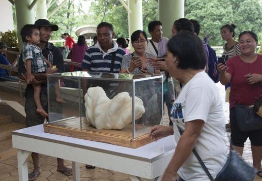 Fotografía sin fecha disponible y cedida este miércoles 24 de agosto de 2016 por la Oficina de Información Pública de Puerto Princesa, que muestra a ciudadanos filipinos mientras contemplan y fotografían una perla gigante en la isla de Palawan, Filipinas.