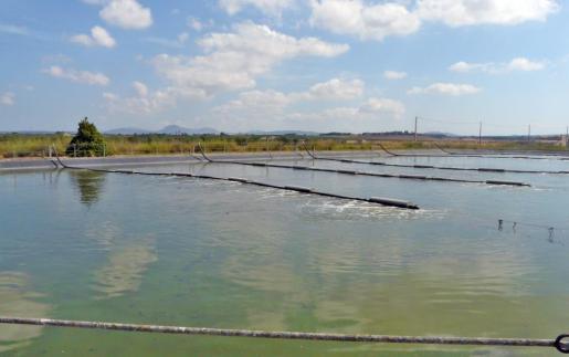 Se han mejorado las instalaciones en Vilafranca. El caudal anual es de 120.000 metros cúbicos.