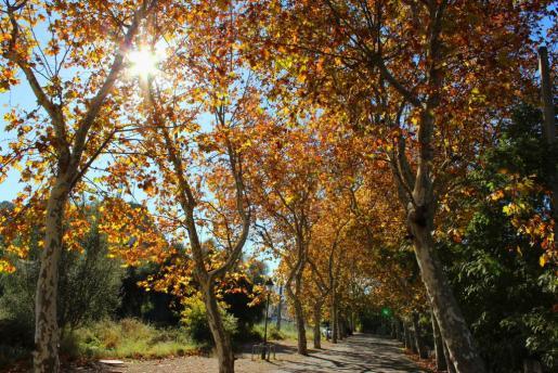 Fotografía de árboles en otoño.