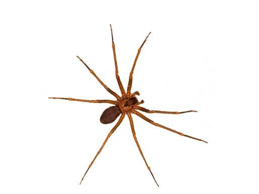 Las araña generalmente no pican a las personas a menos que se sientan amenazadas.