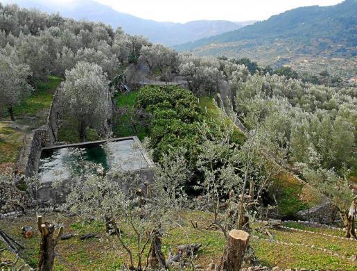 Govern y Consell tendrán proyectos conjuntos para preservar el paisaje agrícola de la Tramuntana.