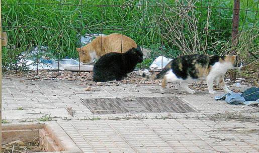 Las colonias de gatos callejeros suponen un problema.