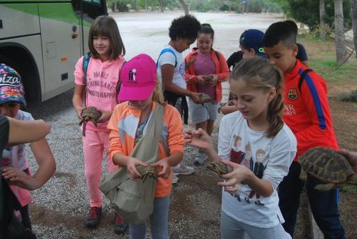 Un grupo de alumnos del colegio público del Rafal Nou han participado en la liberación de 85 tortugas en el parque natural de Mondragó.