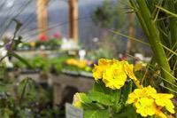 Especialístas en jardineria entre otros servicios
