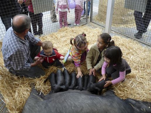 Los niños disfrutan tocando las crías de cerdo negro mallorquín del criador Tomeu de son Marron.