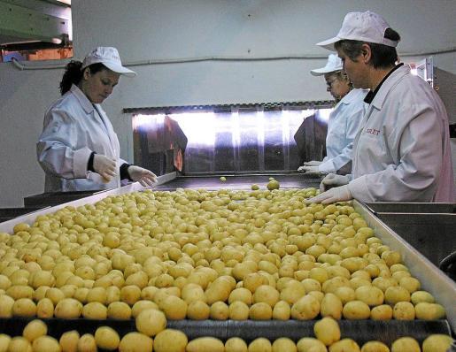 El 'Brexit' no está afectando a las exportaciones de patatas de Mallorca, que en el acumulado enero-septiembre han crecido un 32,20 %, superando los 8,6 millones de euros.