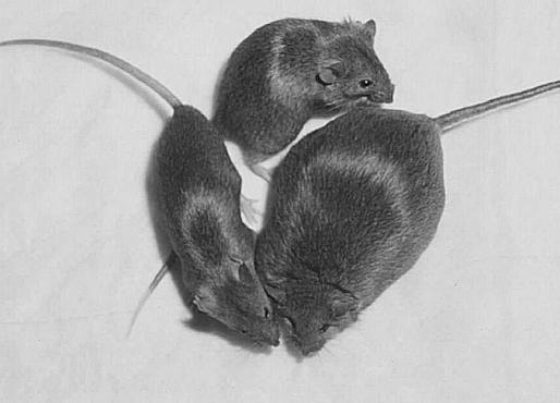 Una psicopedagoga reconvertida en defensora de los animales ha conseguido recoger 17.000 firmas para impedir el «genocidio» de los roedores en la capital francesa.
