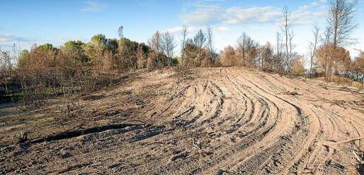 La recuperación de la zona es muy débil, según los ecologistas. El suelo arenoso contiene poca materia orgánica, por lo que la germinación de especies será más lenta. Sa Canova se quemó, en dos incendios los días 16 y 17 de agosto, afectando a 24,6 hectáreas.