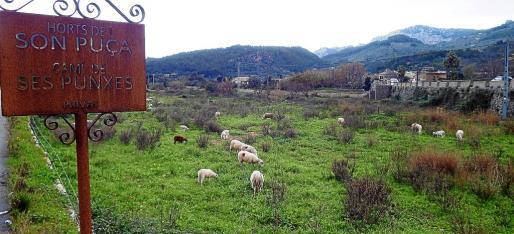 Vista general de los terrenos, parte de Son Puça, que se convertirán en huerto experimental y de producción.