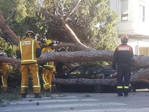 En la imagen, los Bomberos de Palma intentando quitar el árbol desplomado encima de un coche.