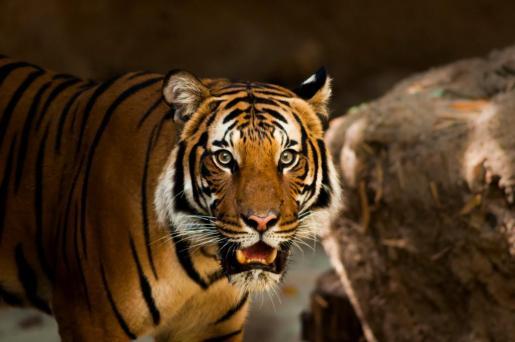 El suceso ha tenido lugar en un zoológico del este de China.
