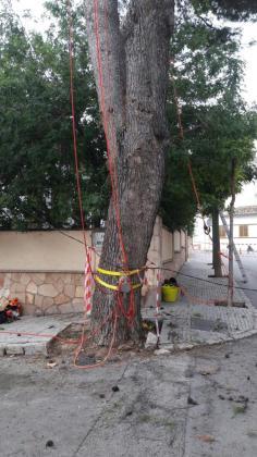 En la imagen, momento de la inspección de los árboles.