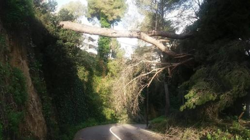 Imagen de la carretera de acceso a los hoteles Valparaíso, Horizonte y Ciutat de Mallorca por Genova.