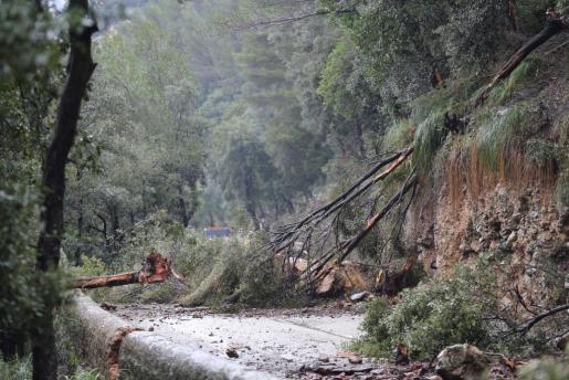 El temporal de viento y lluvia ha afectado a distintas vías de la Isla.