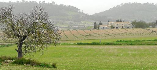 El Ajuntament de Sant Joan admite que no tienen los medios necesarios para controlar el cumplimiento del catálogo de patrimonio.