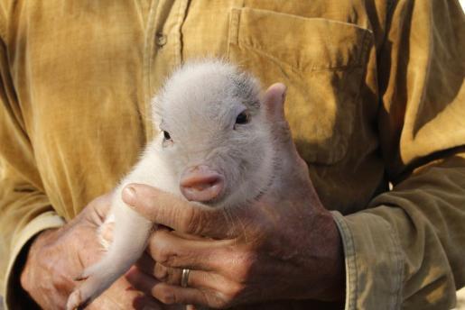 El Congreso iniciará las reformar necesarias para que el Código Civil incluya una categoría especial para los animales como «seres vivos dotados de sensibilidad».