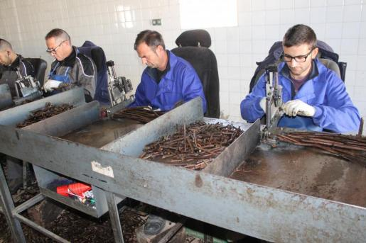 Imagen de los trabajadors de los viveros Villanueva en la bodegas Biniagual.