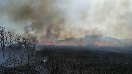 Un incendio arrasa el 80% de ses Feixes des Prat de Vila en Ibiza.