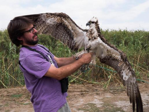Ingrid es un águila pescadora de gran tamaño.